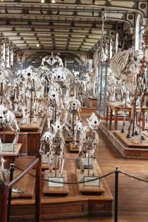 Musée de la Paléontologie, Paris